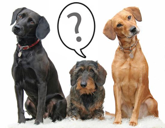Ar ateisi į pakartotinį susirinkimą? (paimta iš http://www.dogfleas.co.uk/)