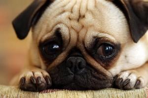 sad-dog-600x400